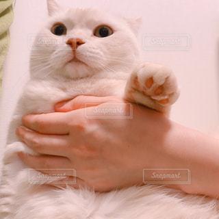 なにかを発見した猫の写真・画像素材[2989814]