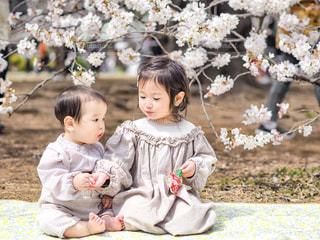 桜とちいさなふたりの写真・画像素材[1942619]
