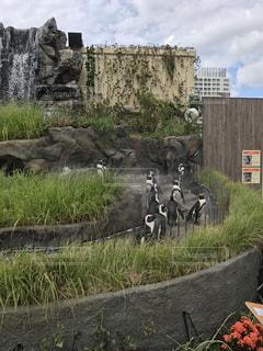 池袋サンシャイン水族館のペンギン - No.761429