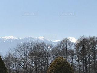 雪の中で山の木の写真・画像素材[786124]