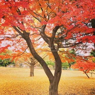 大きな木の写真・画像素材[1157129]