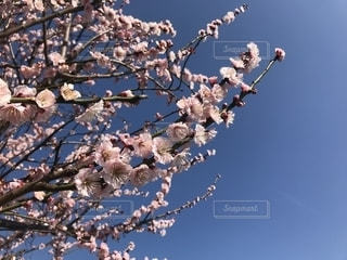 木の上に座っている鳥の群れの写真・画像素材[1838386]
