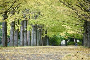 公園の木の写真・画像素材[851818]