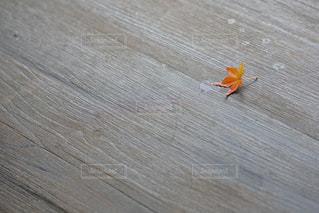 木の部分の写真・画像素材[874792]