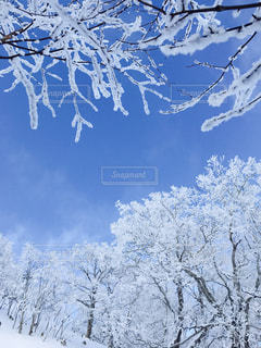 霧氷パラダイスの写真・画像素材[913252]