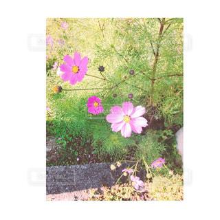 近くの花のアップの写真・画像素材[874888]