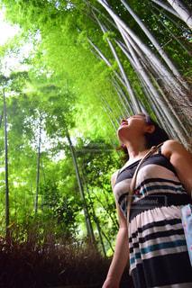 竹林に立つ女性の写真・画像素材[766193]