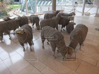 海外,羊,ヨーロッパ,観光,外国,旅行,旅,電話,ドイツ,海外旅行,ひとり旅,フランクフルト,コード,テレフォン,情報通信博物館,電話コード