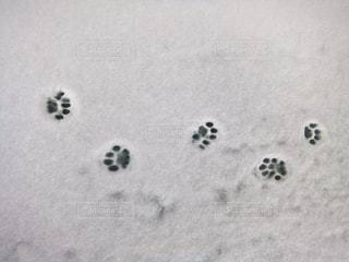雪についた猫の足跡の写真・画像素材[1824083]