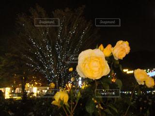 自然,公園,花,夜,夜景,緑,植物,フラワー,散歩,黄色,お花,鮮やか,イルミネーション,ライトアップ,旅行,旅,ツリー,蕾,イエロー,デート,栃木,カラー,黄,色彩,あしかがフラワーパーク,yellow,多彩,日帰り,幸せの黄色