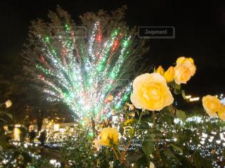 公園,花,夜,夜景,木,緑,植物,フラワー,散歩,黄色,お花,鮮やか,イルミネーション,ライトアップ,旅行,旅,ツリー,デート,栃木,カラー,黄,色彩,あしかがフラワーパーク,日帰り,幸せの黄色