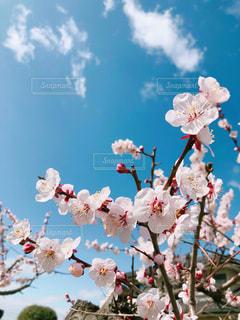 お花と空の写真・画像素材[1838586]