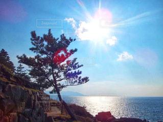 自然,風景,海,空,木,屋外,太陽,白,ビーチ,雲,綺麗,晴れ,青空,晴天,岩場,青,水面,海岸,日光,景色,反射,水平線,シルエット,光,大木,樹木,逆光,崖,地面,地平線,伊豆,快晴,グラデーション,静岡,景観,眺め