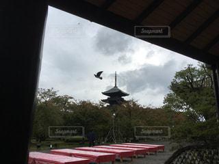 東寺の五重の塔と鳩の写真・画像素材[906827]