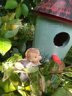 緑の庭の小さな紅い屋根のお家の写真・画像素材[1177432]