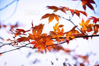 自然,秋,紅葉,軽井沢,長野県