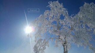 背景の山と木の写真・画像素材[900838]
