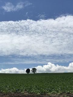 空には雲のグループの写真・画像素材[1866812]
