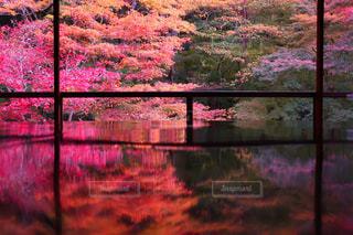 京都 瑠璃光院の紅葉の写真・画像素材[863617]