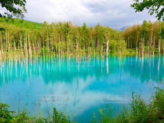 青い池の写真・画像素材[880173]
