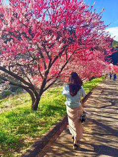 木の隣に歩道を歩く女性の写真・画像素材[903771]