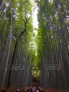 森の人々 のグループの写真・画像素材[906167]