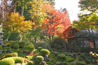 庭の植物の写真・画像素材[906205]