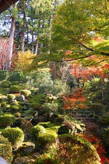 庭の植物の写真・画像素材[906207]