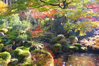 背景の水の庭の写真・画像素材[906210]