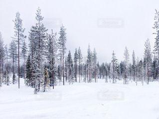 フィンランドの雪景色の写真・画像素材[925036]