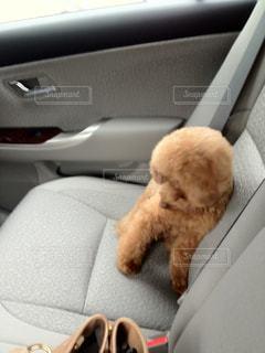 安全運転でお願いします。の写真・画像素材[974824]