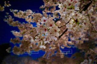 近くの花のアップの写真・画像素材[1122010]