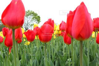 植物の赤い花の写真・画像素材[1122468]
