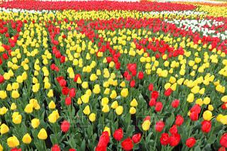 色とりどりの花のグループの写真・画像素材[1122471]
