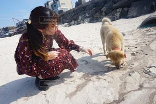 済州のビーチで - No.770918