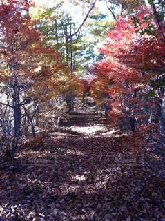 秋への道の写真・画像素材[764680]