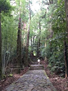 雑木林でパスの写真・画像素材[767906]