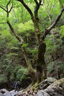 森の人々 のグループの写真・画像素材[788104]