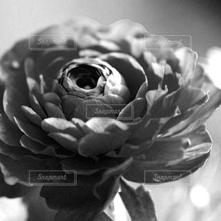 近くの花のアップの写真・画像素材[814525]