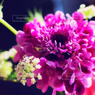 近くの花のアップの写真・画像素材[843038]