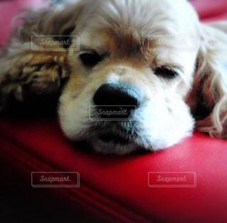 近くに犬のアップの写真・画像素材[977062]