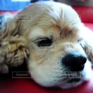 近くに犬のアップの写真・画像素材[980567]