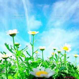 近くの花のアップの写真・画像素材[1098921]