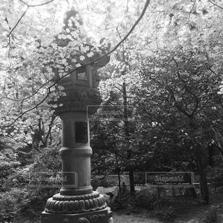 建物の前にツリーの写真・画像素材[843822]