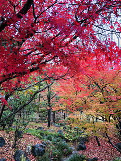木にピンクの花のグループの写真・画像素材[875529]