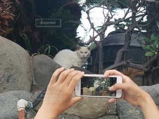 猫を撮るの写真・画像素材[1465438]