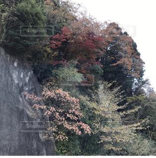 フォレスト内のツリーの写真・画像素材[802391]