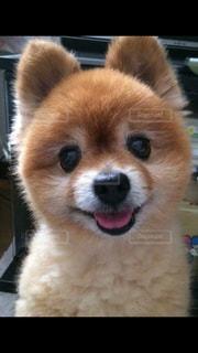 愛犬の写真・画像素材[830980]