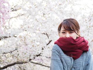 お花見 - No.890493
