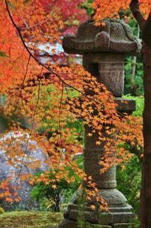 京都橋本関雪記念館の写真・画像素材[769988]